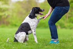 Hunden ger en kvinna tafsa fotografering för bildbyråer