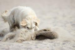 Hunden gräver sand royaltyfri foto