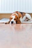 Hunden har en vila nära till ett varmt element royaltyfri fotografi