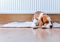 Hunden har en vila nära till ett varmt element arkivbild