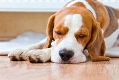 Hunden har en vila nära till ett varmt element arkivfoton