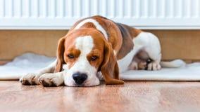 Hunden har en vila nära till ett varmt element arkivbilder
