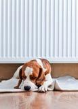 Hunden har en vila nära till ett varmt element royaltyfri foto