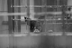 Hunden i buren Fråga att gå och att kalla ägaren Skydd av djur Monohrom royaltyfri foto