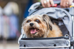 Hunden i en vagn Arkivfoton