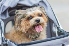 Hunden i en vagn Royaltyfri Foto