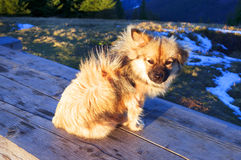 Hunden i solen royaltyfria bilder