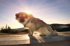 Hunden i solen royaltyfria foton