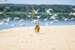Hunden kör royaltyfri foto