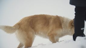 Hunden kör till och med snön arkivfilmer