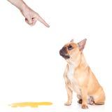 Hunden kissar Royaltyfria Foton