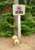 Hunden kissar på inga hundar som låts tecknet. Royaltyfria Foton