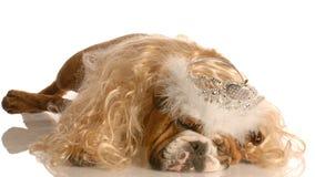 hunden klädde som princess upp royaltyfri bild