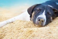 Hunden kopplar av att sova på dagen för sommar för havssandstranden Arkivbild