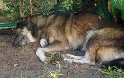 Hunden lägger ner under trädet Royaltyfri Foto