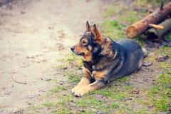 Hunden lägger utomhus Arkivfoton