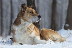 Hunden ligger på den vita snön ferie arkivbild
