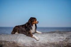 Hunden ligger på en journal royaltyfria bilder