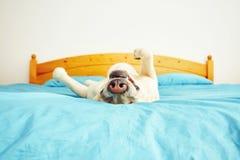 Hunden ligger på sängen Royaltyfri Foto