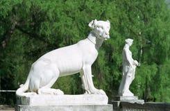hunden marmorerar kvinnan Royaltyfri Foto