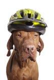 hunden matters säkerhet Arkivfoton
