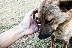Hunden med den ledsna framsidan Royaltyfria Bilder