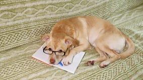 Hunden med exponeringsglas books isolerat gammalt f?r begrepp utbildning arkivfilmer