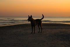 Hunden med solnedgång på nathonstranden Fotografering för Bildbyråer