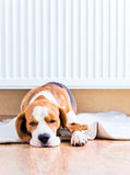 Hunden nära till ett varmt element royaltyfria foton