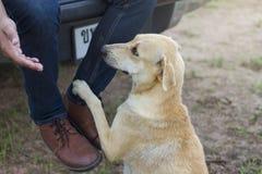 Hunden når för att hans fot ska trycka på hans fot royaltyfria foton