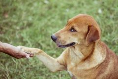 Hunden når för att hans fot ska trycka på hans fot royaltyfri foto