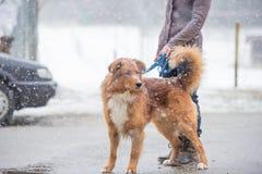 Hunden och ägaren går i staden i vinter arkivbild