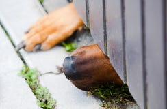 Hunden och dörren royaltyfri foto
