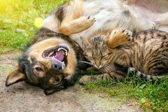 Hunden och katten är bästa vän Fotografering för Bildbyråer