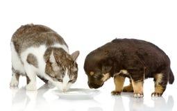 Hunden och katten äter tillsammans. Royaltyfria Foton