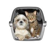 Hunden och katten sitter i behållareasken -- isolerat på whit royaltyfri foto