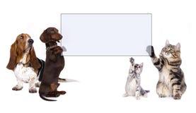 Hunden och katten tafsar det hållande banret Royaltyfri Bild