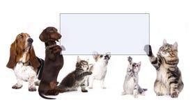 Hunden och katten tafsar det hållande banret Arkivfoton