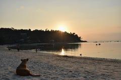 Hunden och solnedgången Arkivbilder