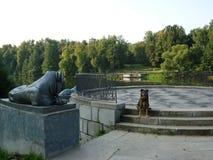 Hunden och statyn av lejonet royaltyfri fotografi