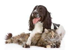 Hunden omfamnar en katt. se kameran. Arkivbild