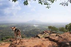 Hunden på överkanten av Sigiriya vaggar Royaltyfria Bilder