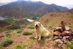 Hunden på bakgrunden av en bergsjö royaltyfri fotografi