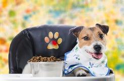 Hunden på barnstol med tafsar tecknet som äter torr mat & x28; färgrik background& x29; Arkivbild