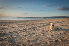 Hunden på ensam tyckande om morgon för strand går Royaltyfria Foton