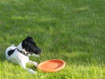 Hunden på gräset Royaltyfri Fotografi