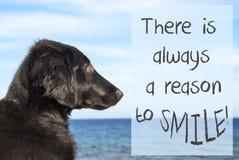 Hunden på havet, citerar alltid anledning att le Royaltyfri Fotografi