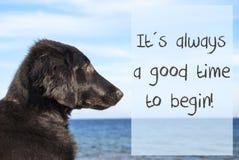 Hunden på havet, citerar alltid en goda Tid för att börja Fotografering för Bildbyråer