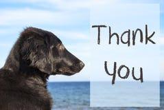Hunden på havet, text tackar dig Arkivfoton