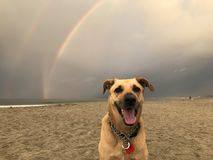 Hunden på slutet av regnbågen arkivbild
